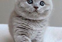 Niedliche kätzchen