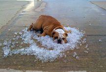 Bulldogz!!! / by Deanna Drake