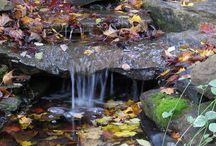 Ponds & Water Gardens in The Fall / Fish Ponds and Water Gardens