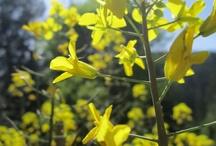 Yellow / by Taryn Wilson