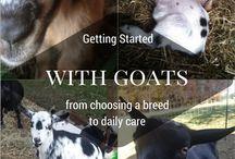 Homestead: Livestock Care