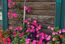 Al aire libre / Jardines, espacios de descanso, piscinas, galerías,porches.......