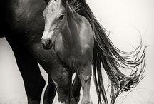 Animals B&W Horses / Caballos