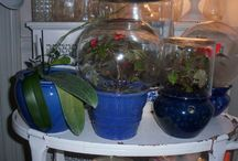 wintering over plants / How to keep plants from one summer to the next
