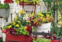 Container Pot ideas