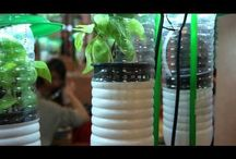 Aquaponics / What is Aquaponics and what are the benefits to setting up an Aquaponics system? http://youtu.be/mQjrdNMdaT4