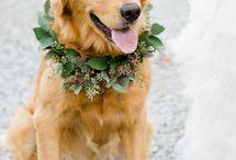 • Wedding Animals We Love •