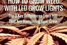 weed with led