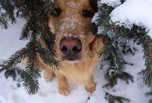 Snow Much Fun / Furry friends enjoying the snow!
