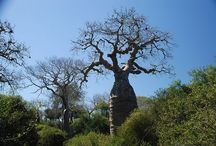 Trees of the World by Name