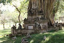 opice - primáti