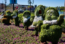Epcot International Flower & Garden Festival 2012 / by Disney Images