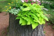 My Tree Stump Garden / by Dana Eckstrom