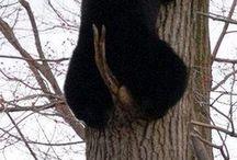 Bears(°●°)Oh My! / by Brenda Martin