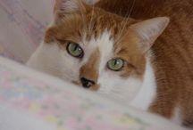 Animals Homeopath Remedies