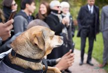 Canine Wedding Guest