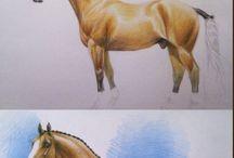 Konie/rysunki