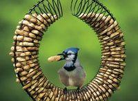 Birdie Birdie