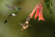 Kolibříci a jiní/Hummingbirds and others: foto by Ondřej Prosický / FOTO by Ondřej Prosický: Kolibříci a jiní
