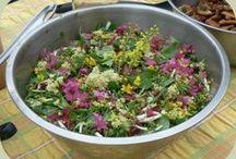 Herbs and Garden