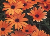 Garden Annuals / by Lawncare Plus Design~Landscaping Hardscaping Patios Gardening