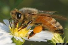 Honey Bee Obsessions / We can't live without the honey bee!