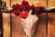 { Steer Skulls  Elegance } / When a cow became a Queen.