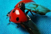 bug&spider ****animals / Benim kadrajimdan
