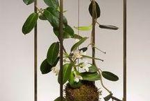 Interiors: Plants