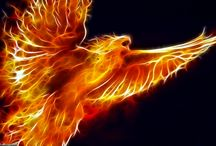 Phoenix Art / by Christine Kallivrousis
