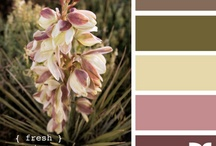 Color Collections: swatches / Color Combos