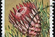 Proteaceae Postage Stamps