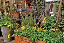 Plants, Plants, Plants!