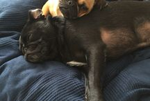 My dogs / My dogs Elvis and Dolly
