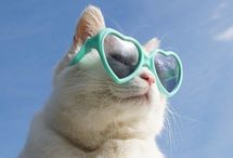 Cats wearing sunglasses