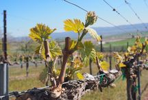 Seasons of the Vineyard / Some of our favorite sites for growing world class grapes in Washington's Columbia Valley