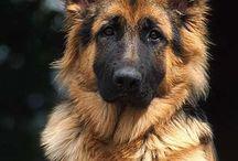Koira jutut