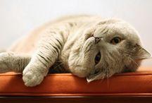 Animals / Tökéletes fekvőhely kutyáknak és cicáknak!!