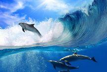 Nature - Ocean Wildlife