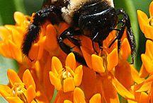 Busy Bumblebee / by Lynn Stadel
