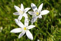 kwiaty kształt