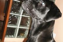 labradorka Vivienn / Wyjątkowa Vivienne szuka domu na stałe. Obecnie w Domu Tymczasowym potrzebuje bieżącego wsparcia w utrzymaniu i leczeniu. ADOPTUJ Vivkę Wirtualnie. Chcesz pomóc napisz do Nas adopcje@labradory.info