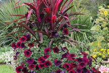 kvetiny okolo domu