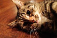 My cat, Manír