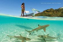 2015 Riviera Paddlesurf Catalogue