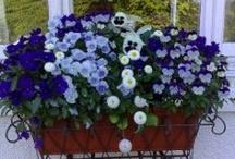Flowers in my widow....