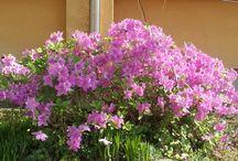 금성초 교정 - 봄꽃의 향연 / 봄꽃의 아름다움