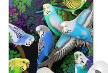 Birds: Budgie / by Wendy Wierenga