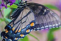 Butterflies, moths, caterpillars