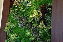 Květinové steny